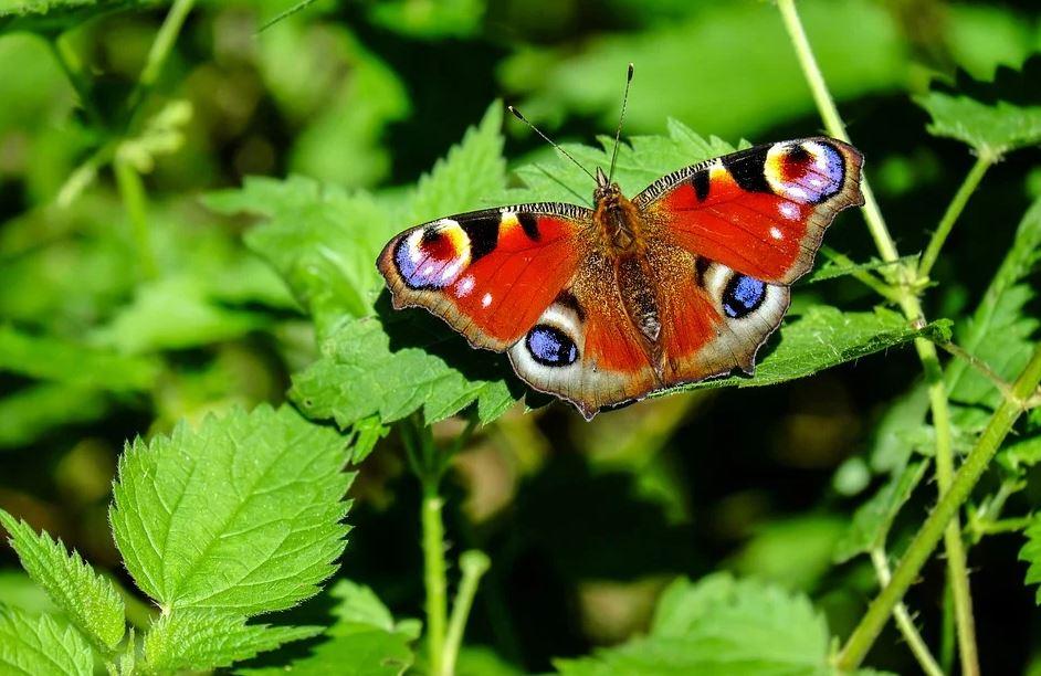 motýl na zahradě
